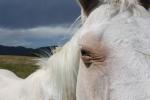Saving a horse